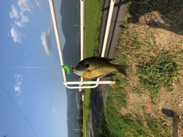 fish02