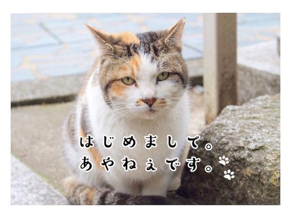 eyecatch_ayaneko (1)